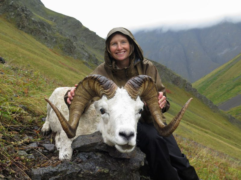 Dall Sheep Drop-off Alaska